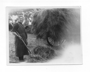 Gathering hay on a farm in blaenpennal